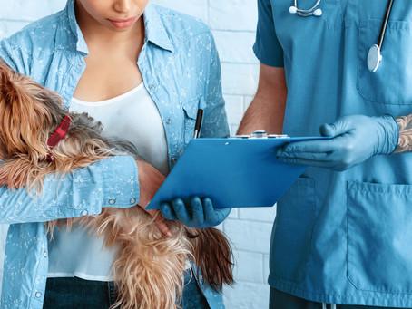 Stériliser sa chienne ou pas ?