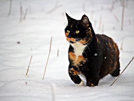 Vous êtes-vous déjà demandé pourquoi votre chat s'échappe de la maison ?
