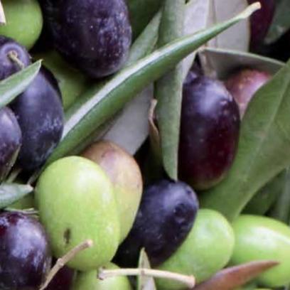 Olive 橄欖油