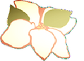 flower-177x128-24-177x128.png