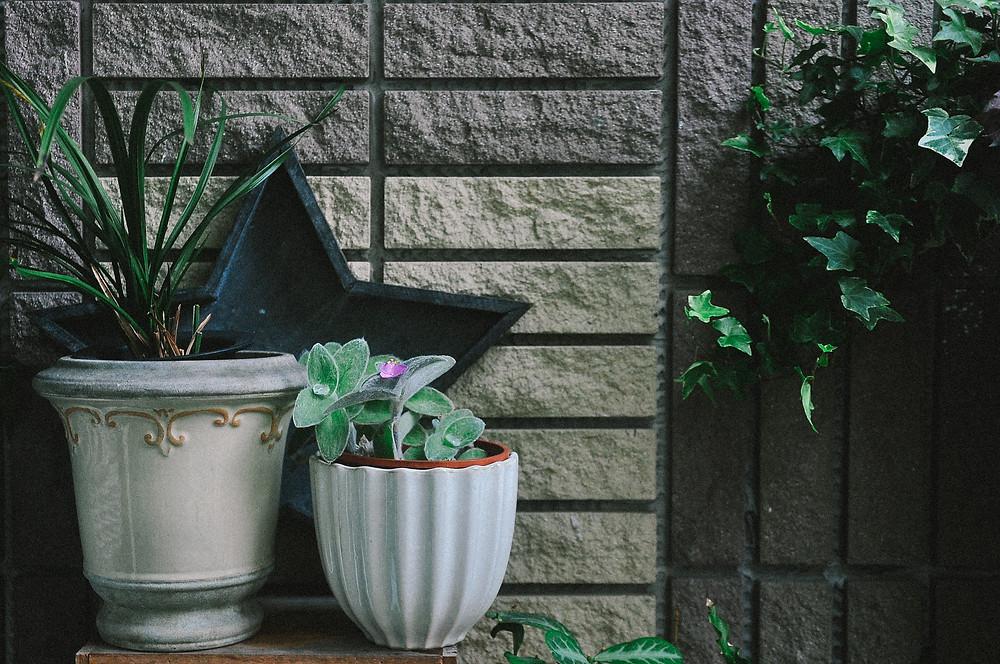 家中的雪娟,在旁還有蘭花與長春藤的相伴。