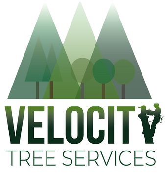 velocity logo final .png