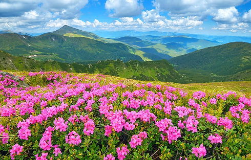 nature-landscape-gory-trava-660.jpg