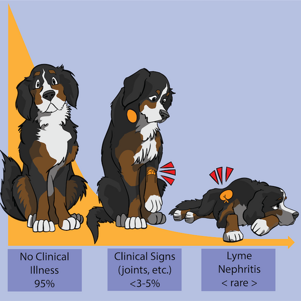 Lyme Presentation (Pubished in Infectious Diseases of the Dog and Cat - Weese/Evason)