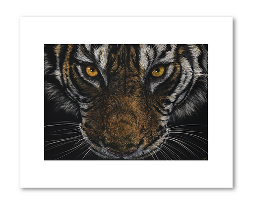 """Tiger Eyes""- 8x10"" Print"