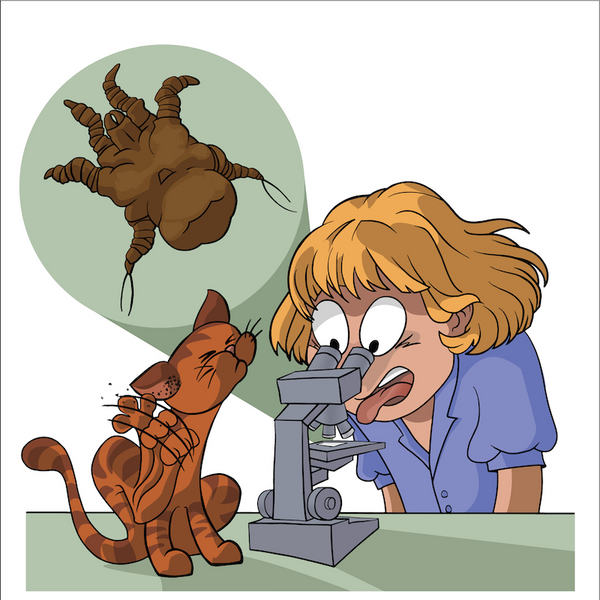 Ear Mites ((Pubished in Infectious Diseases of the Dog and Cat - Weese/Evason)