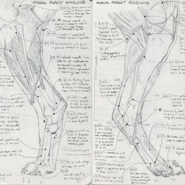Acupuncture Diagrams I (Personal)