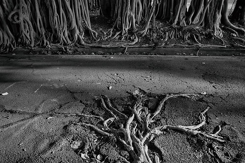 Road Roots