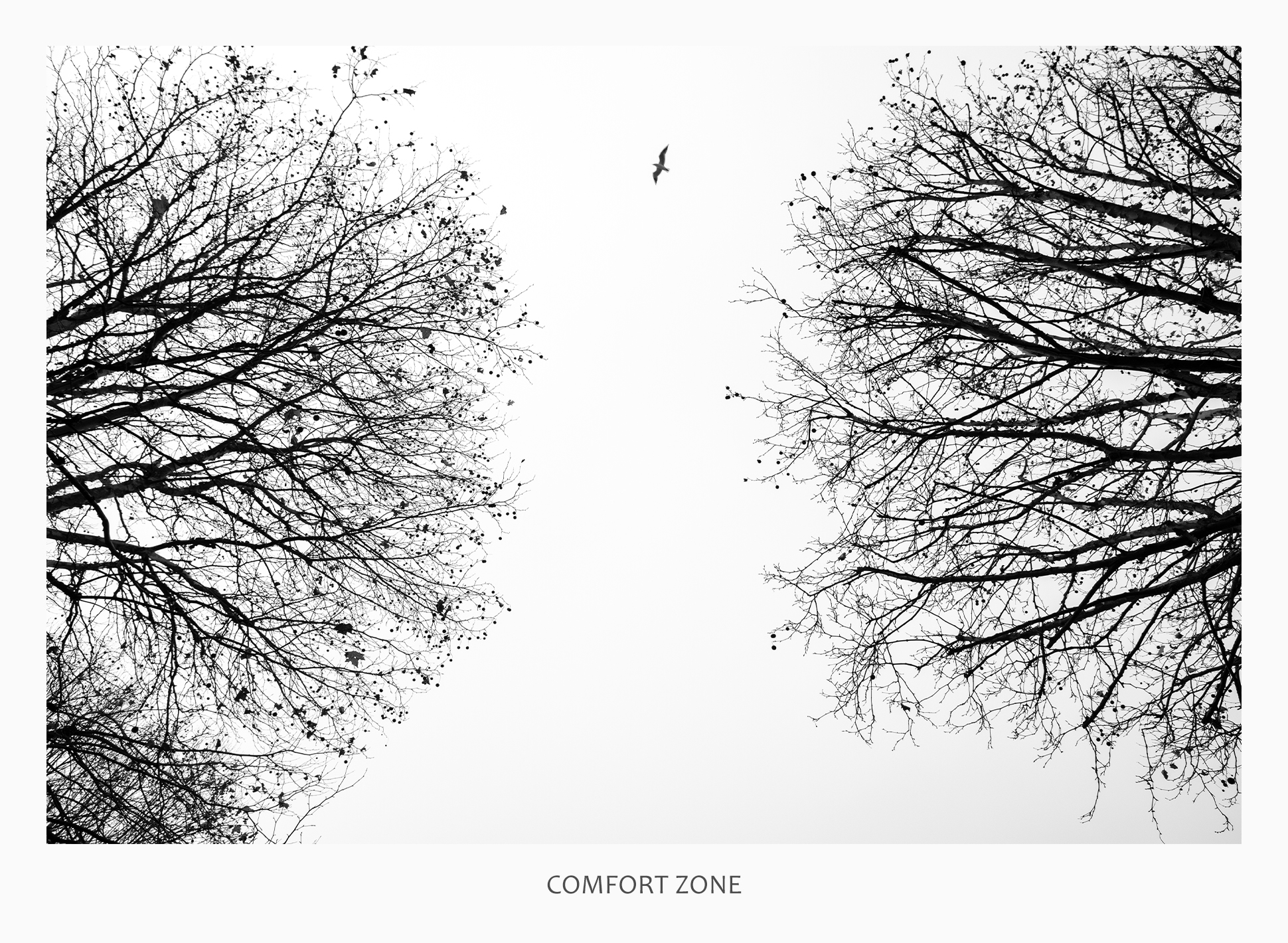 11 43691 - Comfort Zone