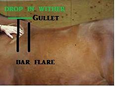 saddle fit 1.jpg