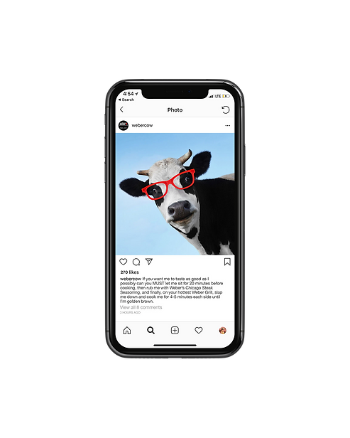 cow-front.png
