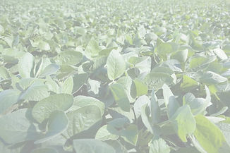 johnston seed soybeans