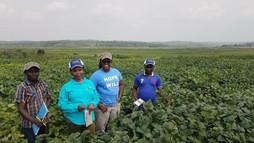 Pan-African Soybean Variety Trial Program