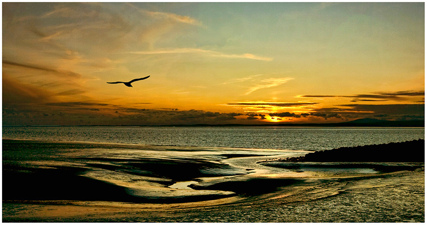 Mud, sunset bird.
