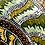 Thumbnail: Lizard