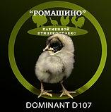 d107.jpg