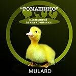 Mulard.jpg