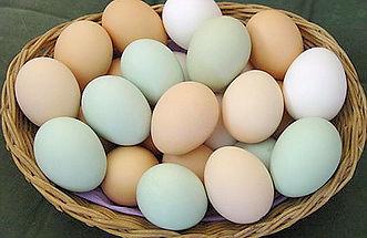 продажа яйца куриного опт розница