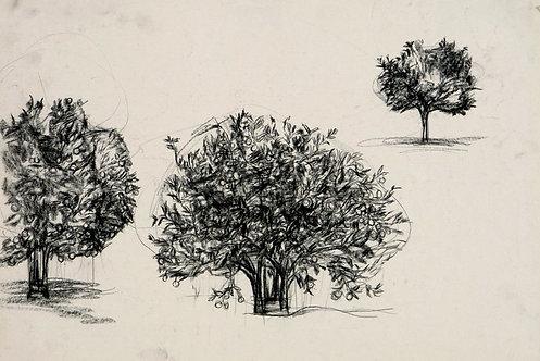 Drawing 0109