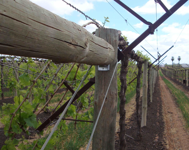 Vineyard Shaw Trellis System