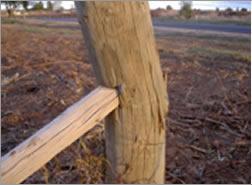 Cutting timber grain