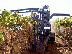 Dried Fruit Harvesting