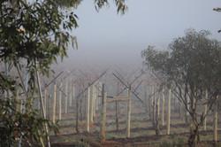 Swinging in the Mist