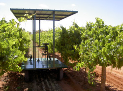 Platform in vines