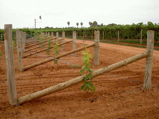 Vineyard Developments