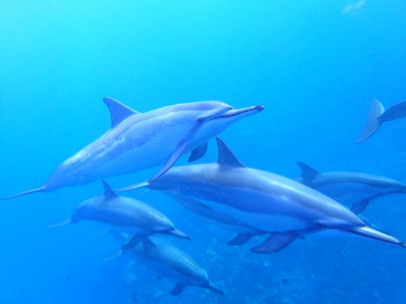 dolphin_edited
