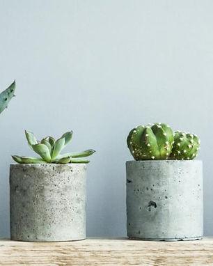 comment fabriquer des pots en béton pour ses plantes grasses .jpg