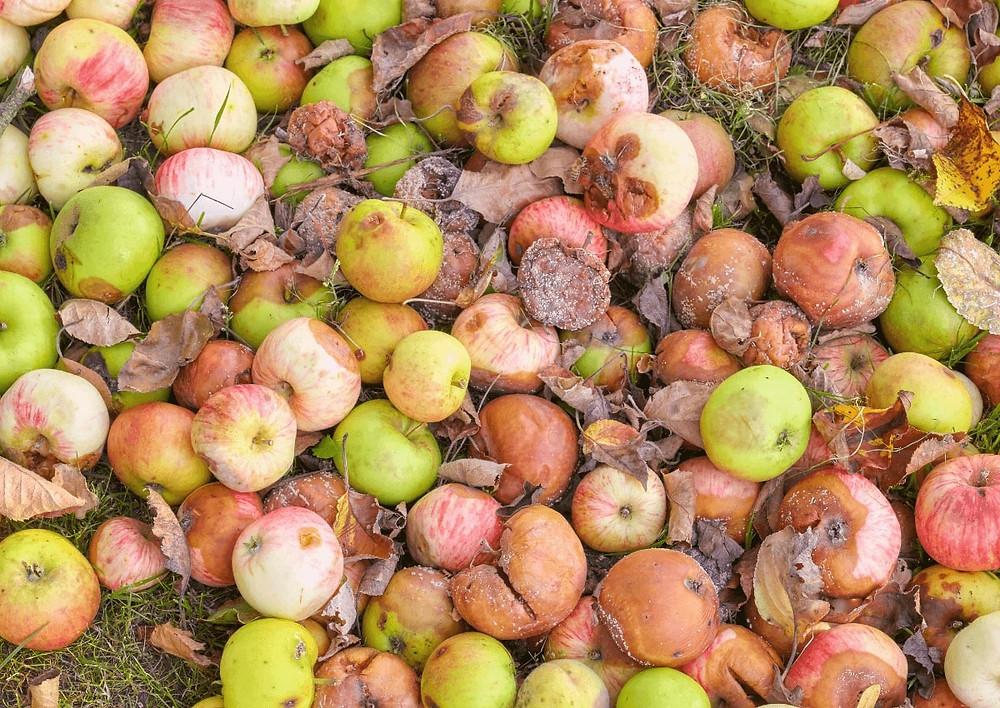 Coproduits de pommes
