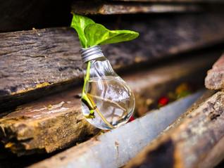Zéro déchet: Lubie écologiste ou véritable levier concurrentiel pour l'entreprise?