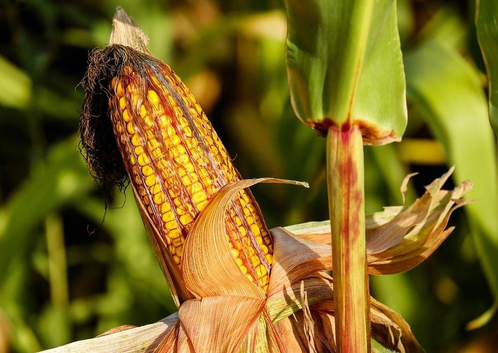 Alimentation animale - Coproduit et biodéchet
