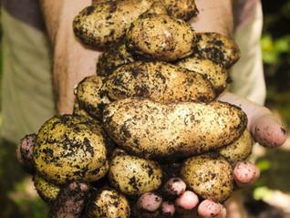 Banques alimentaires : un maillon essentiel de l'économie circulaire pour valoriser les biodéchets