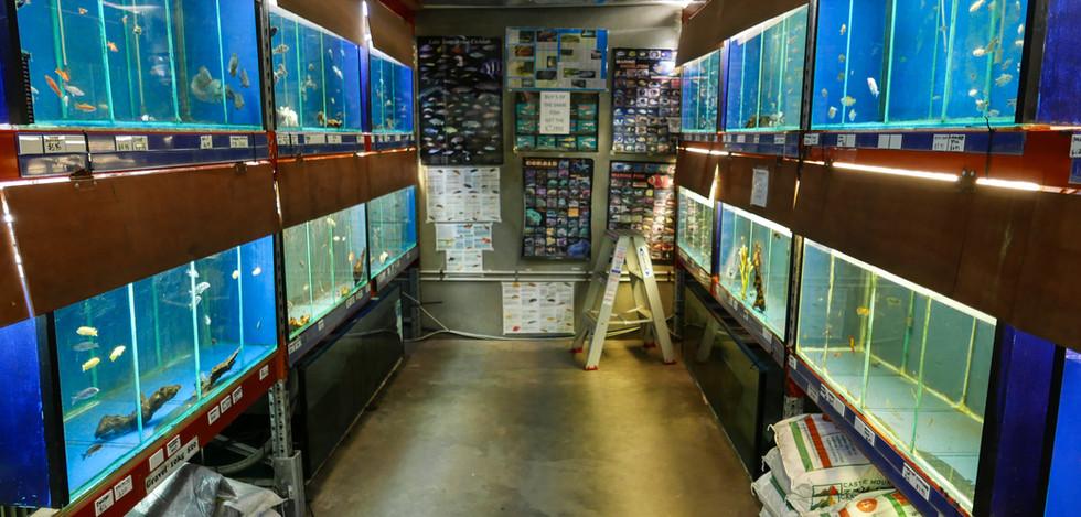 Blacktown Fish Tropical