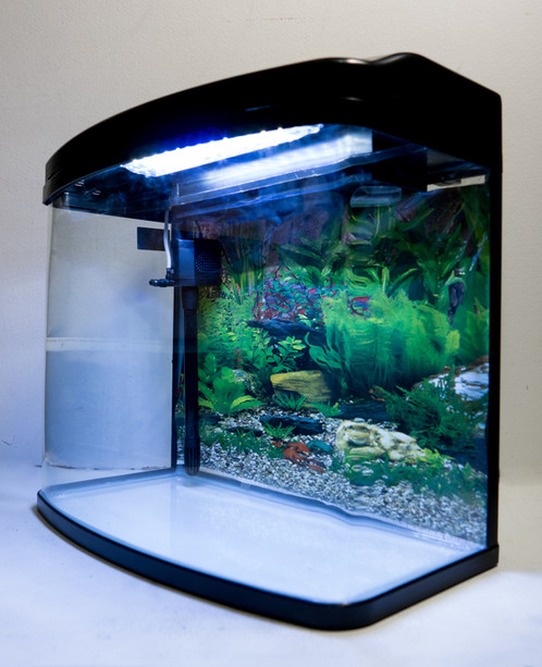 neon 65l fish tank aquarium blacktown blacktown pet. Black Bedroom Furniture Sets. Home Design Ideas