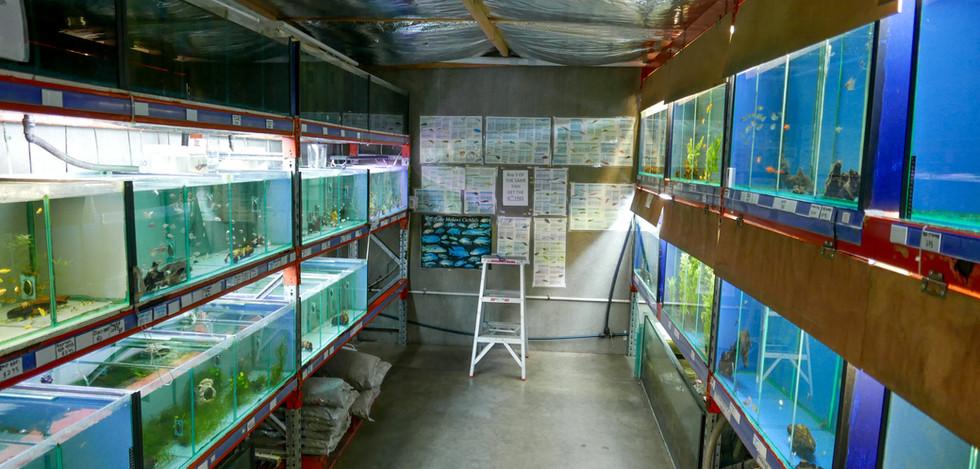 Blacktown Fish Cichlids