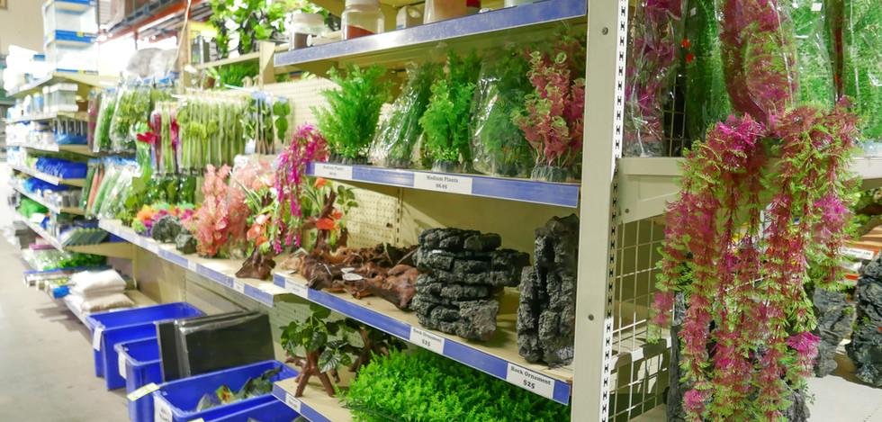 Blacktown Fish Tank plants