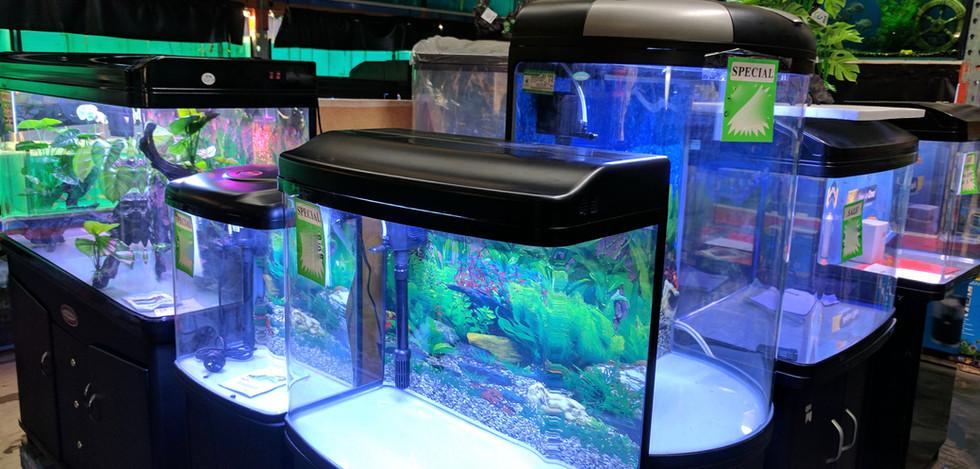 BPP Fish Tank Display.jpg