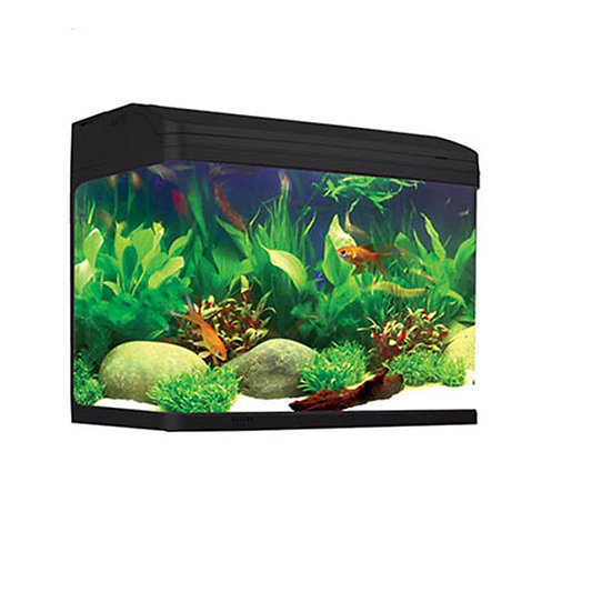 Curved Glass Aquariums for sale Sydney