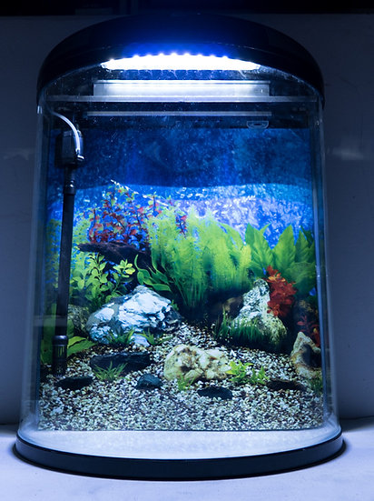 NEON 92L Blacktown Fish Tank Sydney