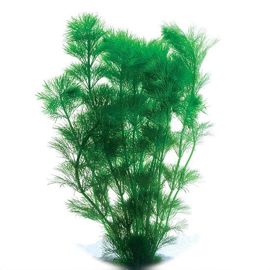 Ambulia Aquatic Plant (5cm Pot)