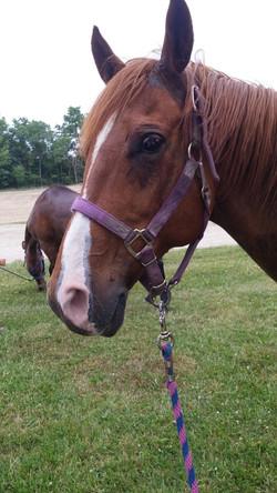 Sassy at the horse park