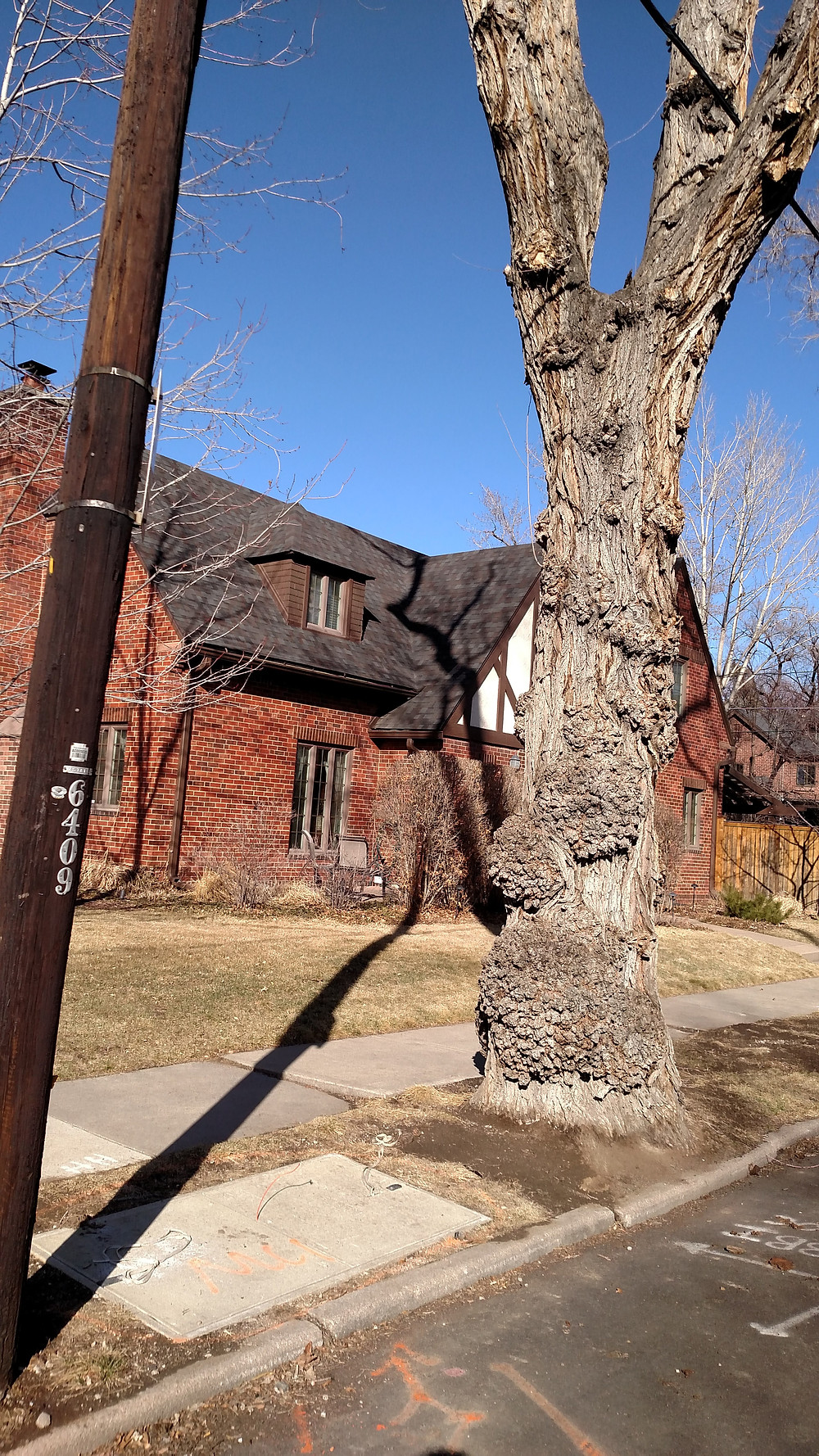 Tree Roots damaged by 5G in Denver