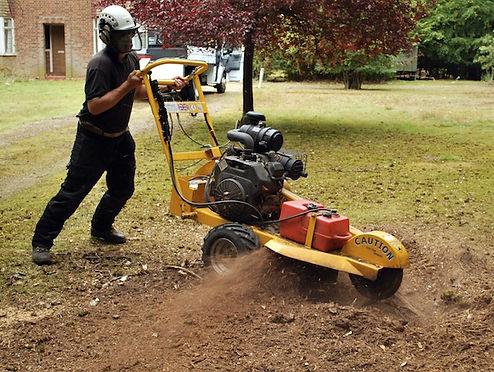 Treescape Tree Services Abergavenny, Tree Surgeon Abergavenny, Tree Cutting abergavenny, Tree Pruning abergavenny,