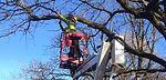 Treescape Tree Services Abergavenny, Tree Surgeon Abergavenny, Tree Cutting abergavenny, Tree Pruning abergavenny,
