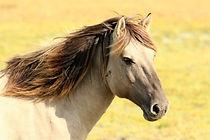 horse-animal.jpg