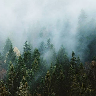 We love moody and foggy forests.jpg