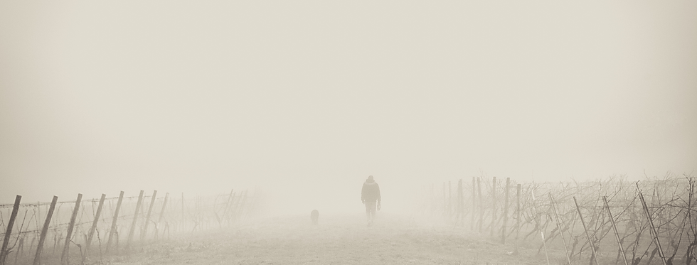 Foggy Path.png